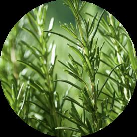 Produce Herbs 4